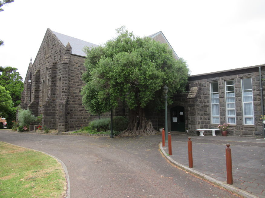 St Stephen's Anglican Church - Entrance with Olive Tree